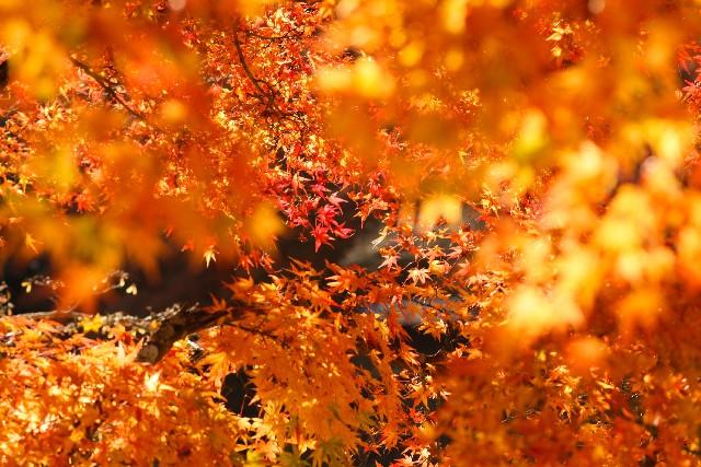 七五三の時期ー紅葉の季節