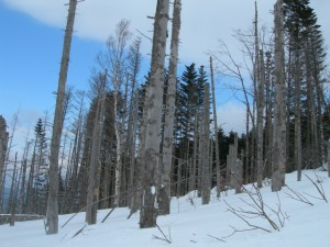 冬山の枯れ木