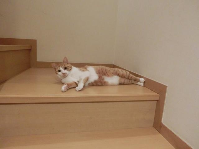 階段に寝そべる猫