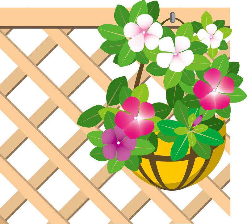 ベランダ 植物
