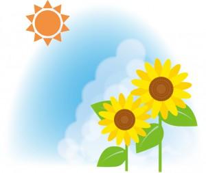 夏 太陽 ひまわり