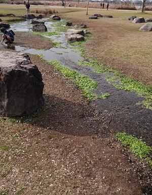 江津湖公園の水辺