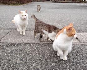 岡岳公園の猫